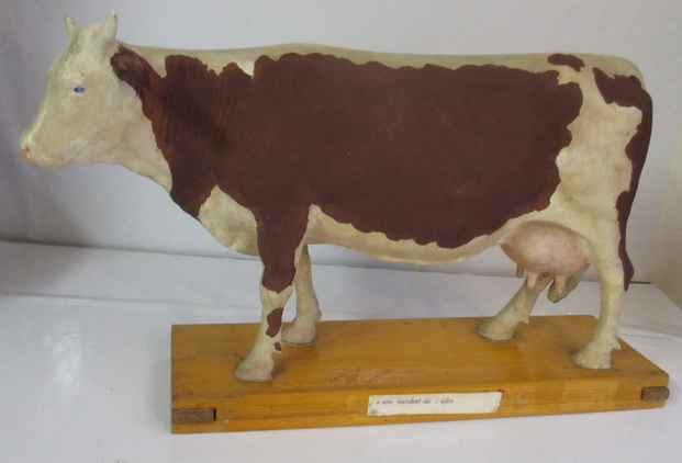 anatomical model cow butchery shop
